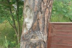 Träd i Åhus